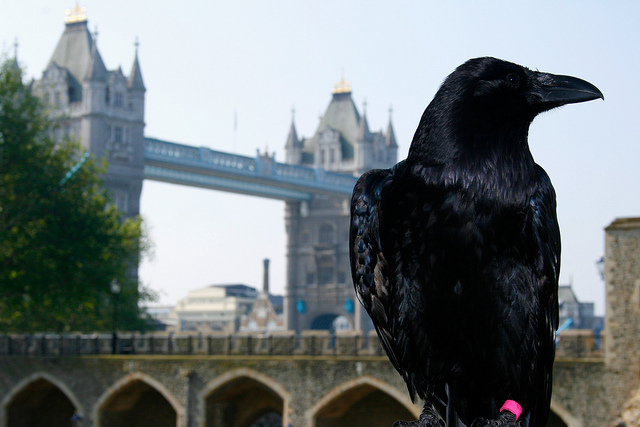 Ravens Heading to London in 2016?